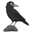 cartoon crow standing in stone on white background vector image vector image
