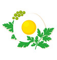 eggs isolated vector image vector image