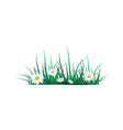 green grass on a transparent vector image vector image