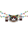 grumpy cat surrounded christmas lights on white vector image vector image