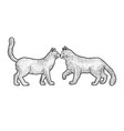 cat love couple greeting sketch vector image