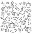 doodle vegetables hand drawn different carrot vector image
