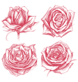 Roses Drawing Set vector image vector image
