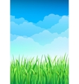 Green Grass and Blue Sky Background Happy Summer vector image