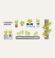 collection of green plants growing in pots with vector image vector image