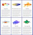 set saltwater inhabitant vector image vector image