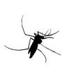Silhouett of mosquito vector image