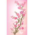 Flowering branch vector image vector image