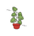 potted monstera palm plants flat fill vector image vector image