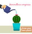 hand watering mammillaria compressa plant vector image vector image