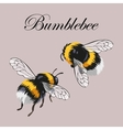 Set of bumblebees vector image