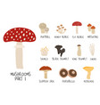 collection or colorful isolated mushrooms vector image