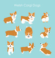 cute and happy welsh corgi vector image vector image