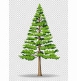 pine tree on transparent background vector image vector image