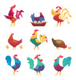 roosters and hens country domestic chicken farm vector image