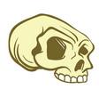 skull6 vector image vector image