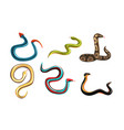 collection snakes venomous snake creatures of vector image