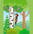 cute woodpecker sitting on a tree and knocks vector image vector image