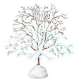 the leafless tree covered with snow isolated on vector image
