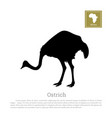 black ostrich silhouette on a white background vector image vector image