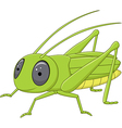 Cute grasshopper posing isolated vector image vector image