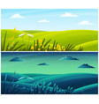 field plants grasses stems summer field lawn vector image vector image