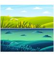 field plants grasses stems summer field lawn vector image