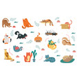 large collection colorful cat icons vector image