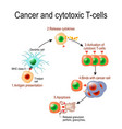 cancer and cytotoxic t-cells vector image vector image