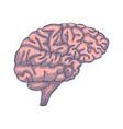 engraving brain hand drawn vector image