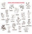 best natural herbs for psoriasis treatment vector image vector image
