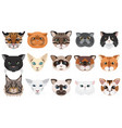 cats heads faces emoticons set vector image