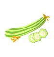 marrow vegetarian food meal vector image vector image