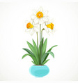 white daffodils with yellow centers grow in a vector image vector image