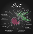 nutrient list for beet vector image