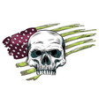skull design with colored american flag vector image vector image