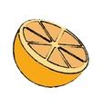 drawing sliced orange juicy vector image vector image