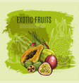 exotic fruit sketch poster for food drink design vector image vector image