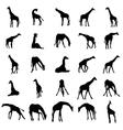 Giraffe silhouettes set vector image vector image