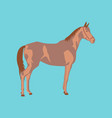 in flat style horse vector image