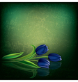 abstract green grunge background with blue tulips vector image vector image