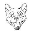boston terrier vector image vector image