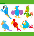 colorful birds cartoon characters set vector image