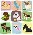 nine dog breeds vector image