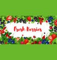 berries and sweet garden fruits banners vector image vector image