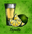 bottle of tequila with lime and glass painted by vector image
