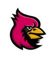 cardinal bird head mascot vector image vector image