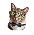 Hand drawn portrait of Cat with glasses and bow vector image vector image