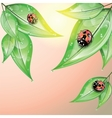 Red ladybugs on the green leaves after the rain vector image