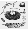 set of hand drawn nest leaves berry egg and vector image vector image